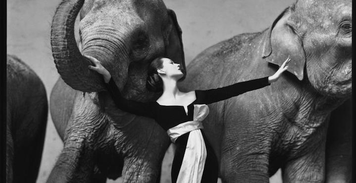 «Довима со слонами»