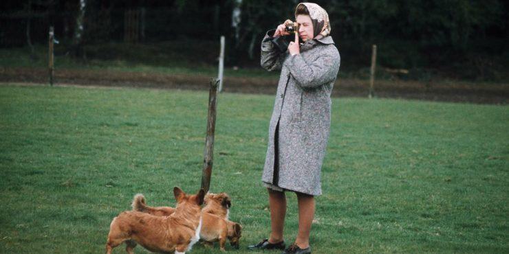 42 фотографии королевы Елизаветы с ее питомцами