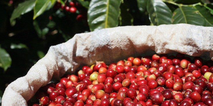 Nespresso представляет лимитированную коллекцию Master Origin Costa Rica