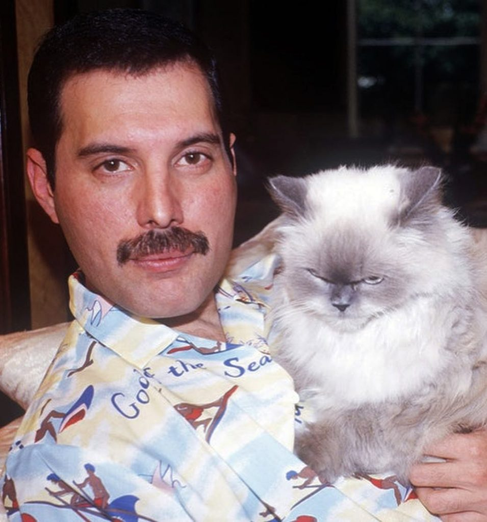 Кошки Фредди Меркьюри: почему их было так много?