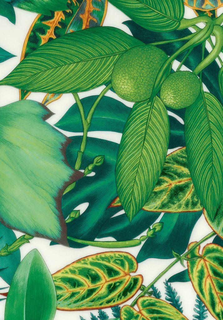 passifolia