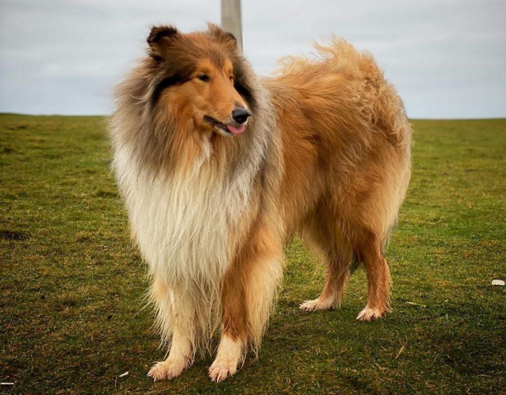 Самые известные собаки в мире