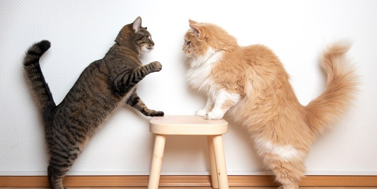 Драка кошек в прямом эфире развеселила интернет-пользователей
