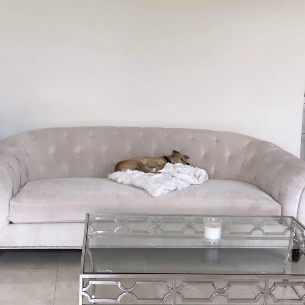 Собака из приюта: что следует знать будущему хозяину?
