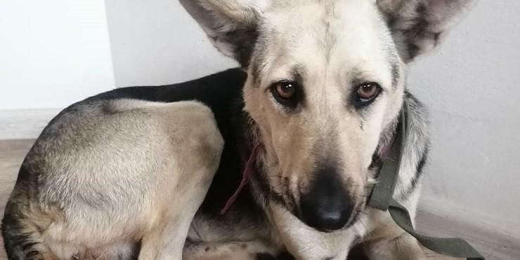 Изнасилование собак в Нур-Султане: что известно на данный момент?