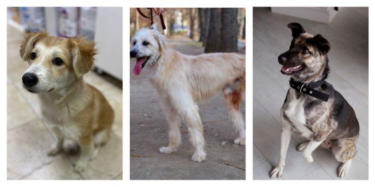 Собачки недели: подопечные приюта «Котопес» ищут хозяев
