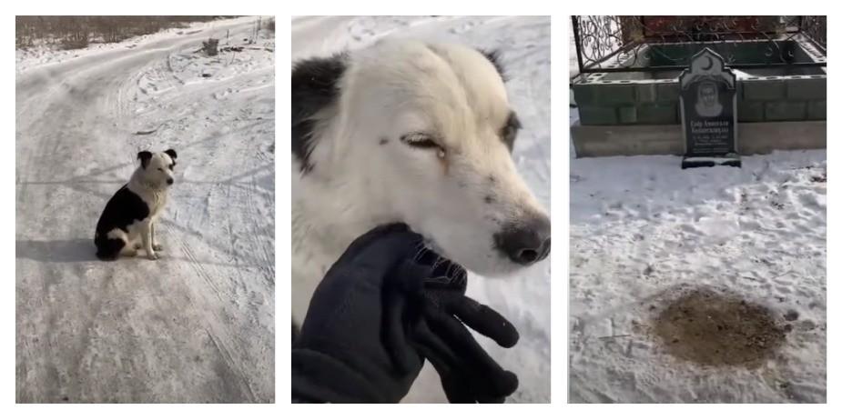 «Хатико из Казахстана»: как собака два месяца сторожила могилу хозяина