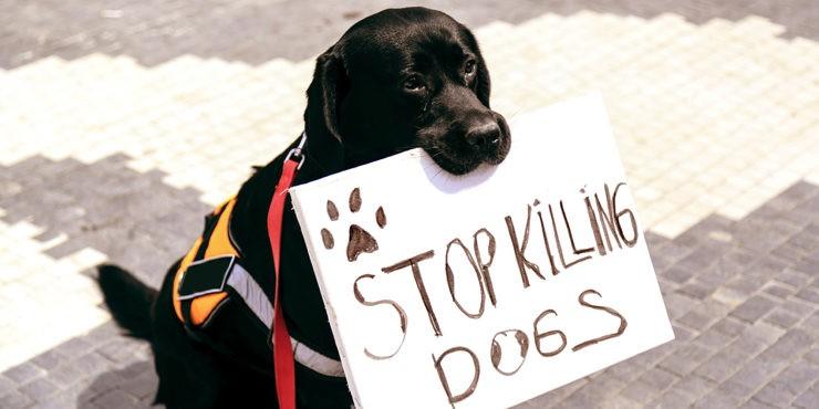 Кошмар средь бела дня: Привязанная к машине собака в Экибастузе подверглась насилию
