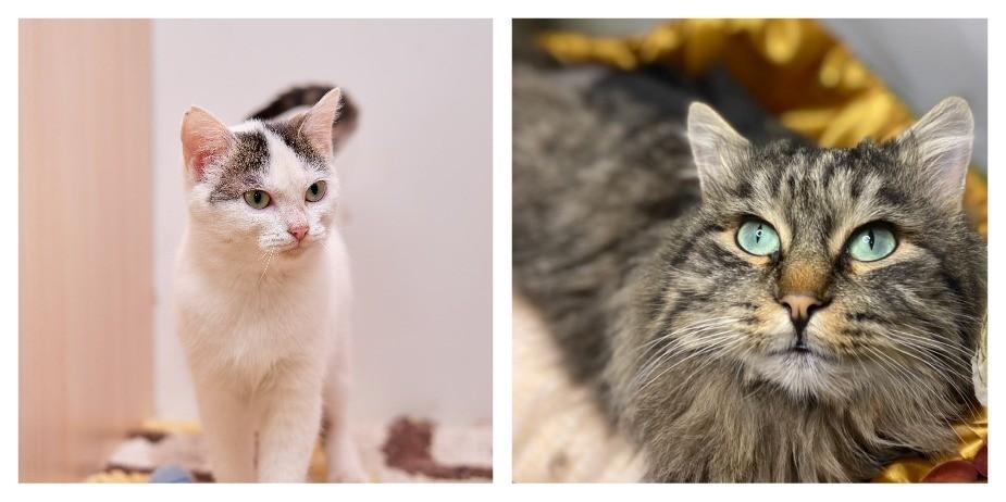 Кошечки недели: подопечные фонда «Котопес» ищут хозяев