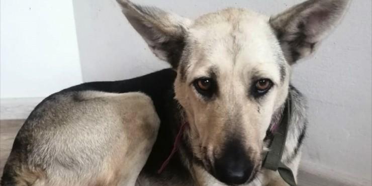 Изнасилование собак в Нур-Султане: что известно о громком деле?