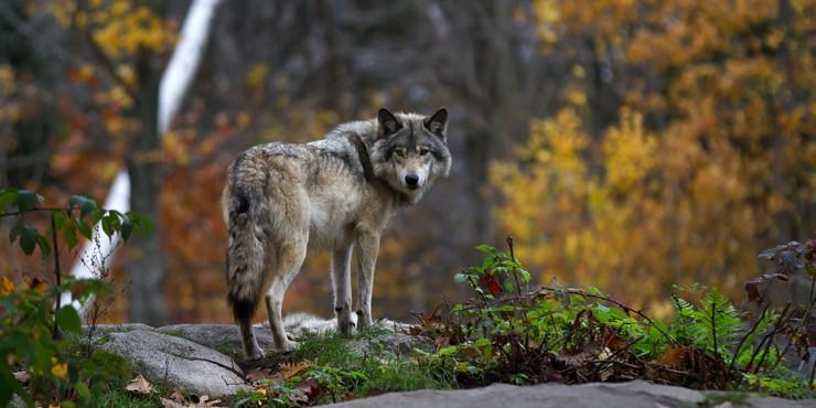 Что известно по делу об убийстве волков близ Алматы?