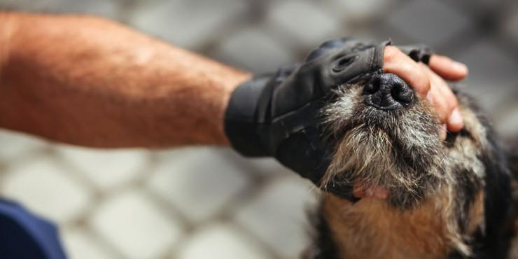 Жестокость во плоти: Живодеры повредили глаза собаке в Шымкенте
