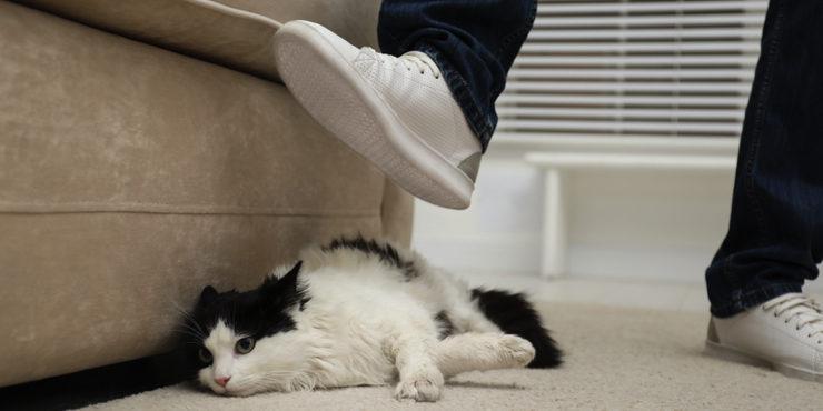 Звериная жестокость: Волонтеры Нур-Султана обнаружили обгоревшего кота