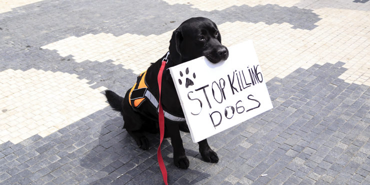 Казахстанцы в ужасе от массового убийства собак редкой породы тазы