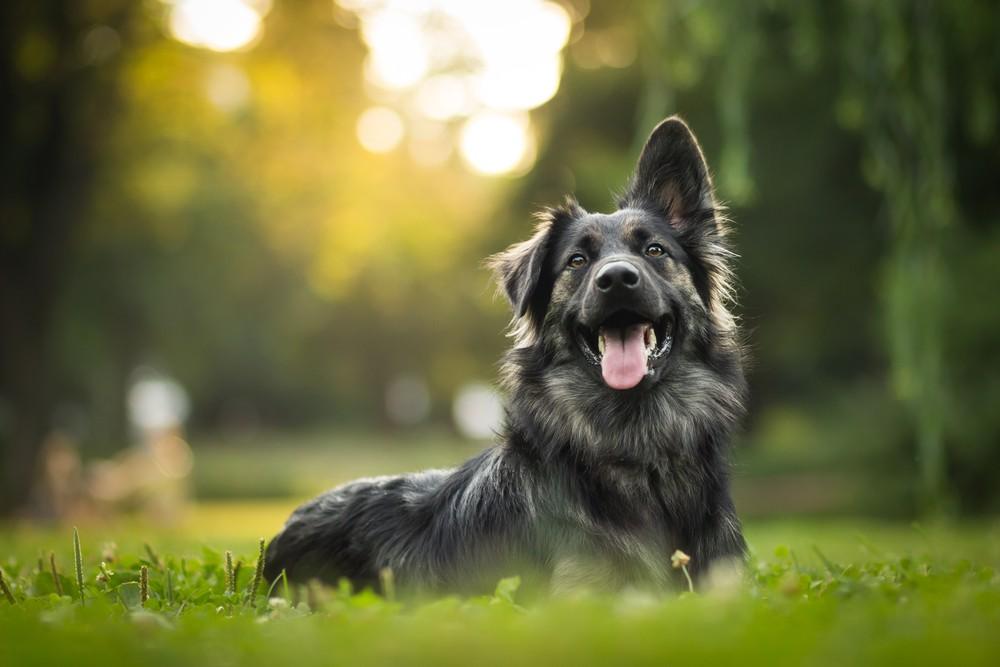 Издевательства над животными продолжаются: в Алматы хозяин до полусмерти избил свою собаку
