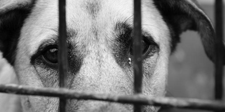 Таразские живодеры повредили глаза собаке и обезглавили ее щенков