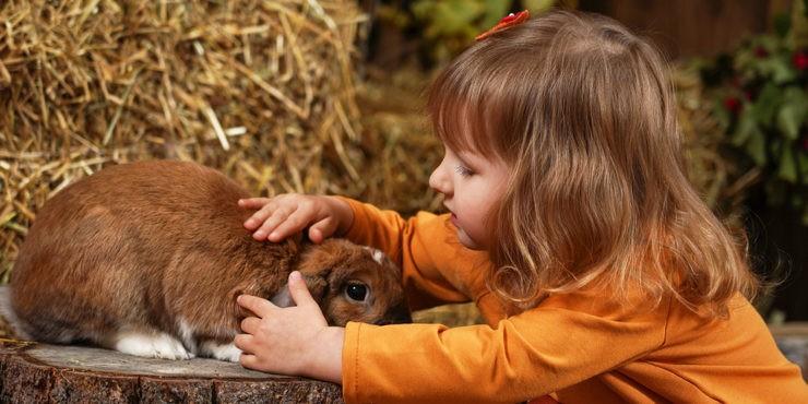 Мертвые кролики в актауском контактном зоопарке шокировали казахстанцев