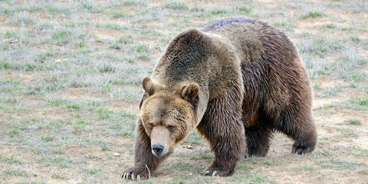Атаковавшая медведя девушка стала звездой соцсетей