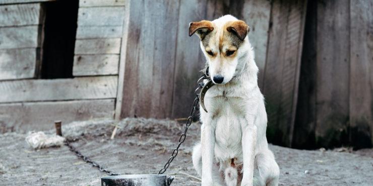 Алматинские автомобилисты спасли собаку от живодера