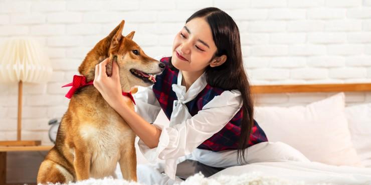 Разумный шаг: В Южной Корее животные получат правовой статус