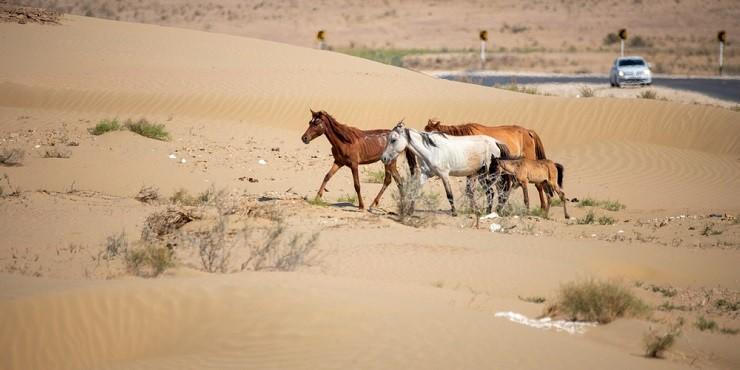 Как можно помочь пострадавшим от засухи казахстанским фермам?
