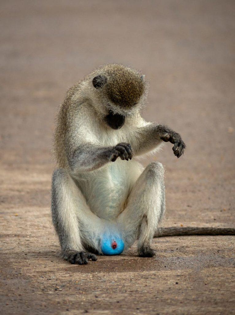 Фотоконкурс Comedy Wildlife Photography Awards 2021 определил самые смешные снимки животных