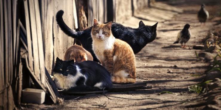 Как акимат Алматы планирует помочь бездомным животным?